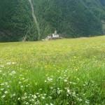 Blumenwiesen machen das Rennradfahren noch schöner