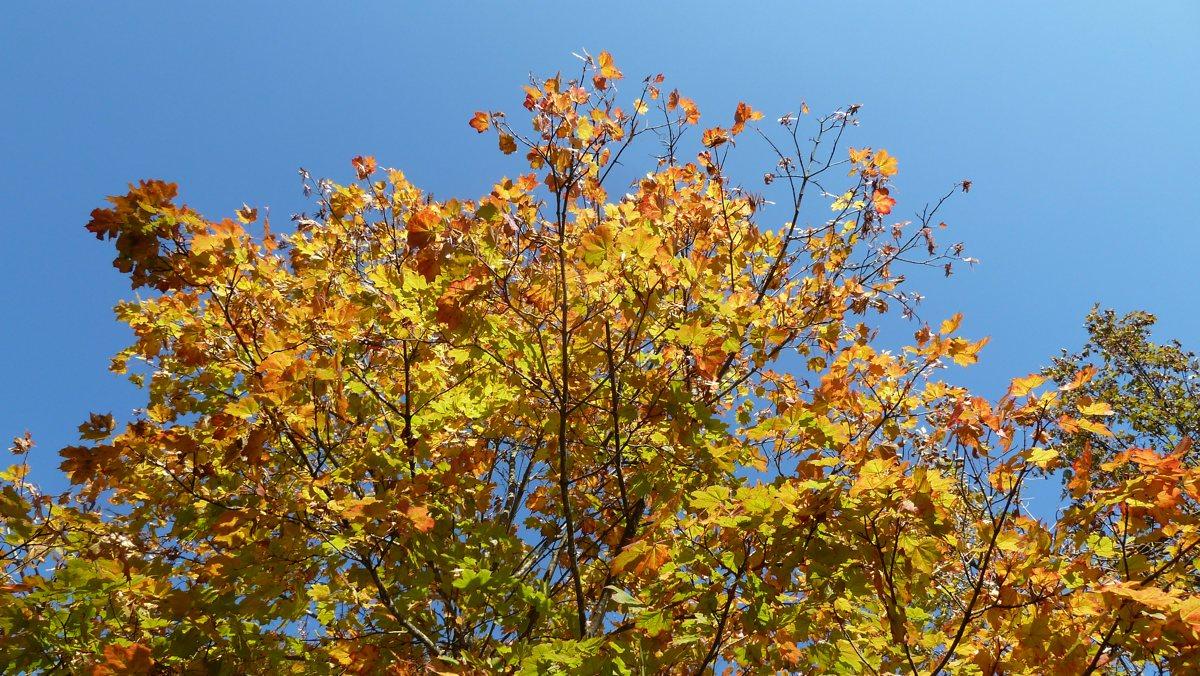 Passo Duron: Herbst