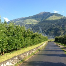 Rennradtour um den Ortler / Vinschger Äpfel